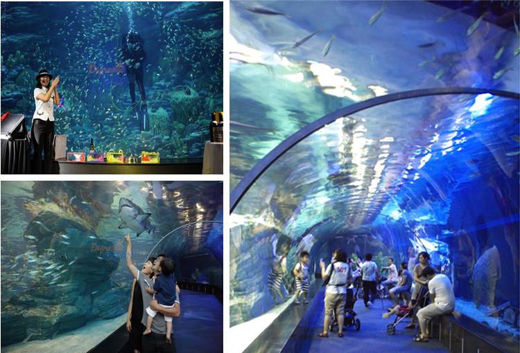 在80米长度的丙烯海底隧道里面行走可以让您有如在海底里面行走一般的