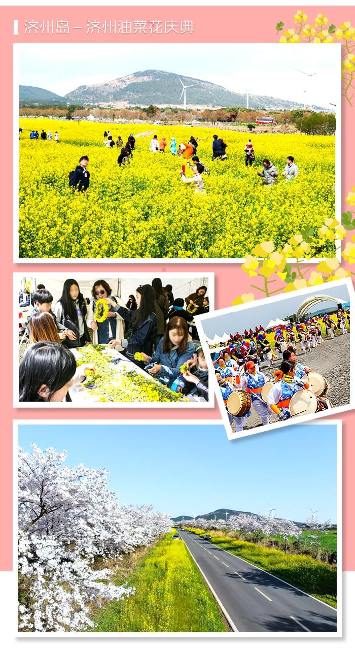1550796616867966.jpg[主题频道/庆典] 抓紧初春美好的2019年韩国春花庆典BEST 5