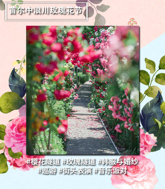 [主题频道/庆典] 首尔&首尔近郊灿烂的玫瑰庆典总整理